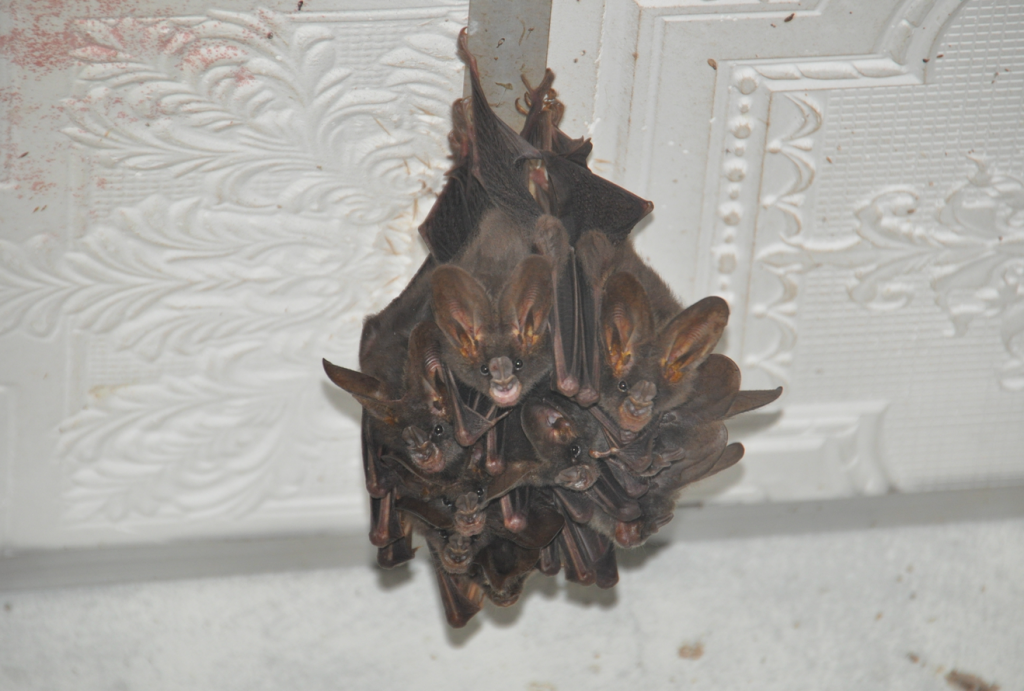 Bats in a house