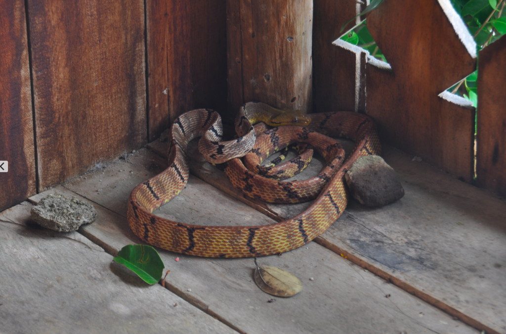 Snake on our porch with stones